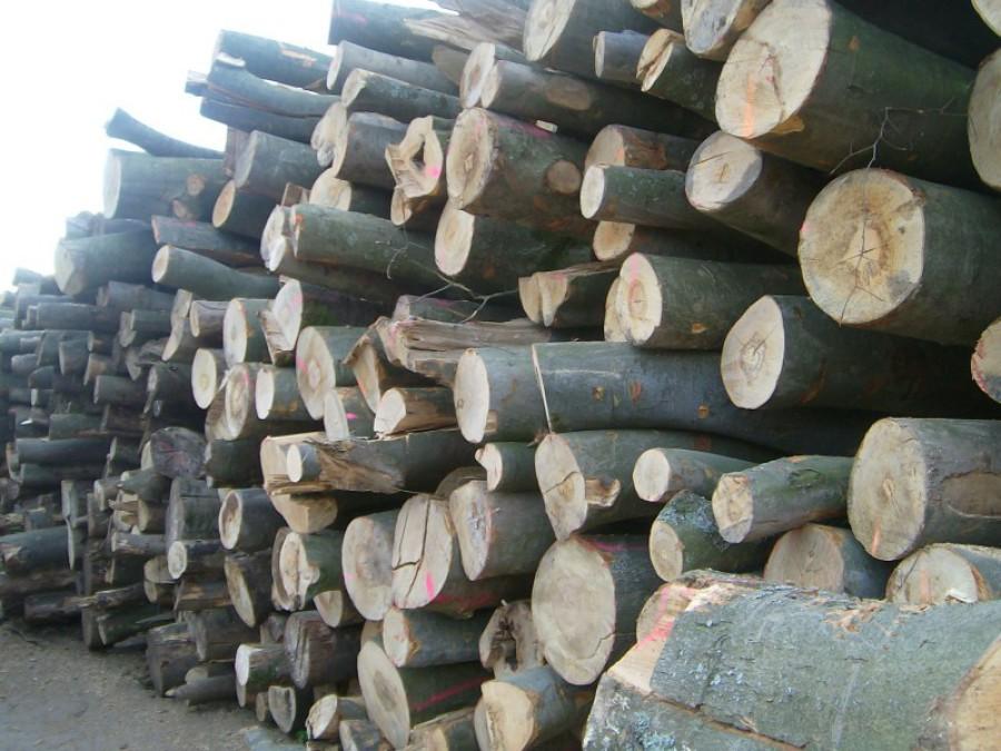 Brennholz roh